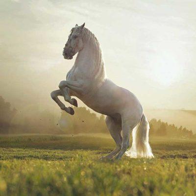 دانلود آلبوم ماهان معین  اسب سفید